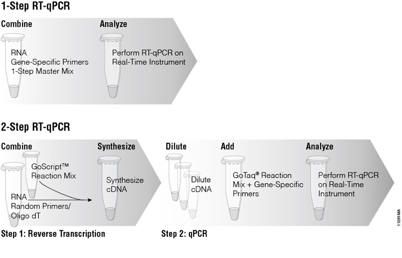 how to read pcr bands