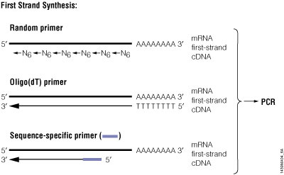 Schematic diagram of RT-PCR.